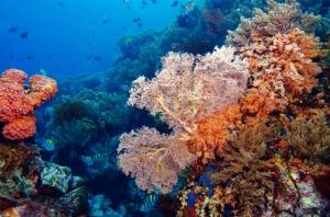 Keindahan ekosistem bawah laut