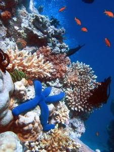 Terumbu karang yg terpelihara, memancarkan keindahan tersendiri.
