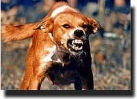 Anjing rabies.