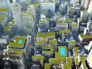 atap hijau di New York, mampu menyejukkan udara dan mengurangi efek urban heat island.