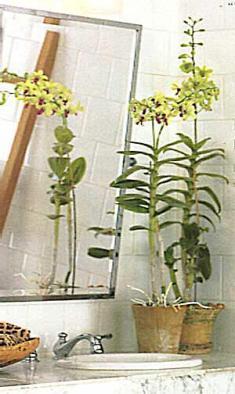 Cuci muka ditemani anggrek kesayangan anda, Green Dendrobium. Pernah terpikirkan ?
