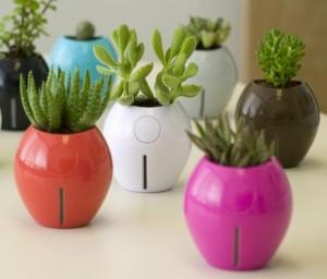 Aneka tanaman mungil, seperti kaktus mini dalam pot2 cantik bisa jadi pilihan.